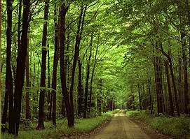 bastar-unveild-lush-green-forest